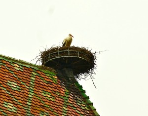 Blog LfB2 stork in nest